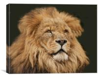 Leo the Lion, Canvas Print