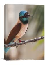Bee Eater, Canvas Print
