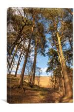 Woodland Path to Stanage Edge, Canvas Print