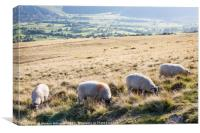 Sheep, Lose Hill, Derbyshire, UK , Canvas Print