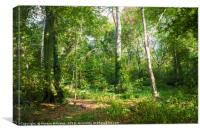 Colwick Woods, Nottingham, Canvas Print