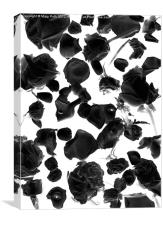 Infrared Flowers #2, Canvas Print