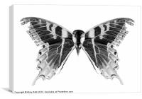 Wings and Skull #1, Canvas Print