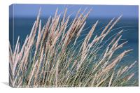Coastal Grass, Canvas Print