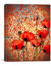 Flanders fields, Canvas Print