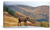 Monarch of the Glen, Canvas Print