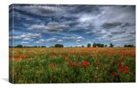 Essex Poppy Field, Canvas Print