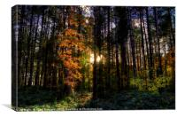 Light in the Trees, Canvas Print