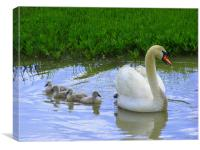 Mummy Swan and her babies, Canvas Print