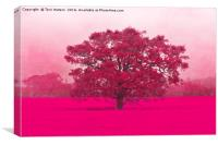 Hot Tree In A Field Of Pink, Canvas Print