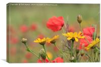 Corn Marigolds And Poppies, Canvas Print