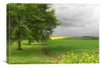 Rapeseed Oil Field Storm Yellow, Canvas Print
