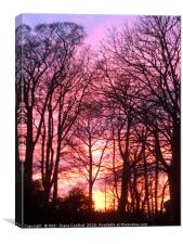 Sunset through Trees in Cumbria, The Lake District, Canvas Print