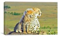 CUDDLING CHEETAH, Canvas Print