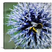 Globe Thistle and visitor, Canvas Print