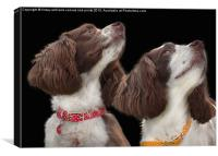 Two Spaniels, Canvas Print