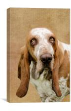 The Basset Hound, Canvas Print