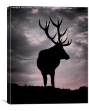 Stag And Sunset 2, Canvas Print