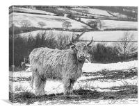 Highland Cow At Beacon Hill Leicestershire, Canvas Print