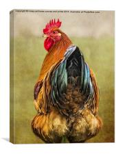 Chickens Hen Party Does My Bum Look Big In This? , Canvas Print