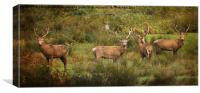 Stag Party The Boys, Canvas Print