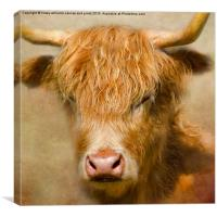 The Hairy Highlanders Collection. Dozy Highlander, Canvas Print