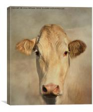 Cow Portrait, Canvas Print