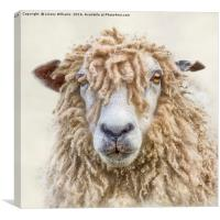 Leicester Longwool Sheep, Canvas Print