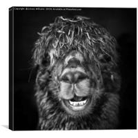 Alpaca. Happy Dayz, Canvas Print