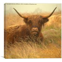 Smiling Highland Cow, Canvas Print
