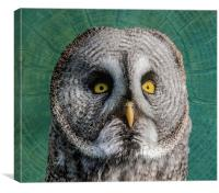 GREY OWL, Canvas Print
