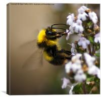 Buzzzzzzzzzzing Around, Canvas Print