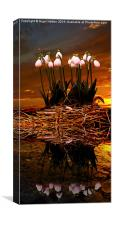 Sunset Snow Drops, Canvas Print