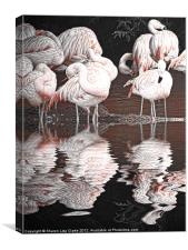 Flamingos, Canvas Print