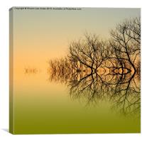 Olive branches, Canvas Print