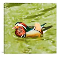 Mandarin duck, Canvas Print