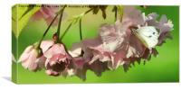 Blossom and Bugs, Canvas Print