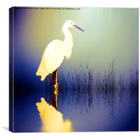 Egret in Amethyst, Canvas Print