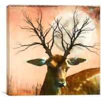 Woodland Dusk, Canvas Print