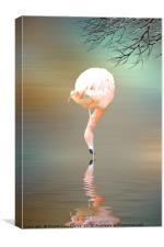 Feathered in pink, Canvas Print