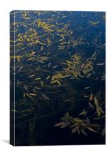 Water leaves, Canvas Print