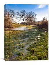 Flooded watermeadow, Canvas Print