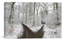 The road less travelled, Canvas Print