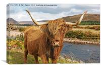 Highland cow cartoon, Canvas Print
