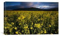 The Yellow Field, Canvas Print