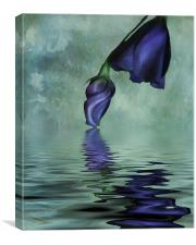 Lisianthus blue, Canvas Print
