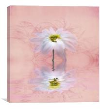 Chrysanthemum in Pink, Canvas Print