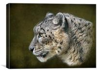 Snow Leopard.., Canvas Print
