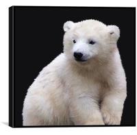 Polar Bear Cub, Canvas Print