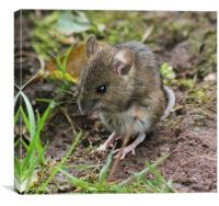 Field Mouse Pose, Canvas Print